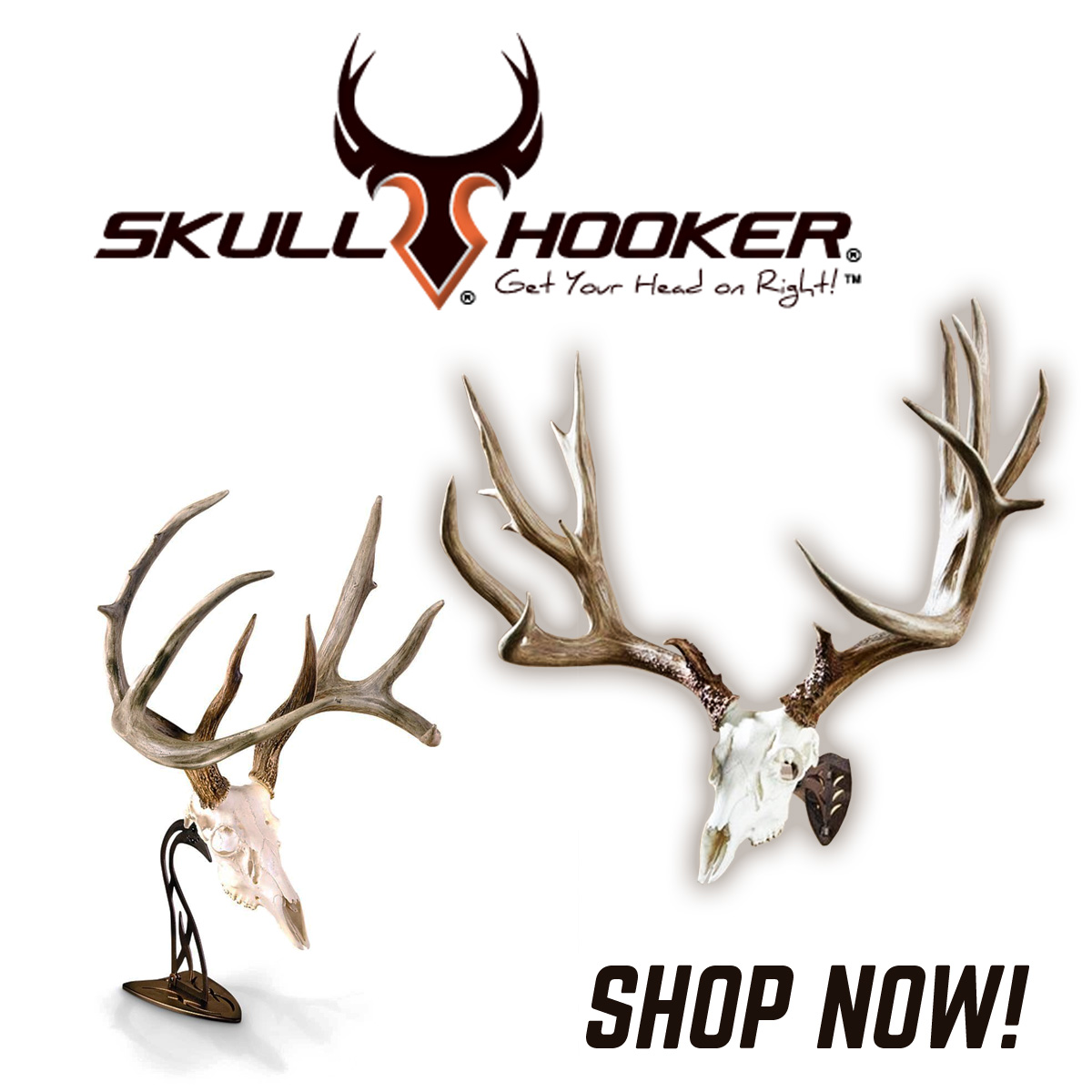 Do it yourself european mount huntaddicts shop skull hooker solutioingenieria Image collections
