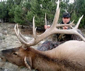 Public Land Elk Hunting: 5 Steps