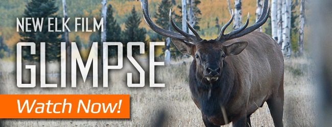 New Elk Film - Glimpse - watch it now!