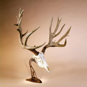 Table Hooker with Mule Deer Skull