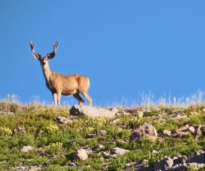 Utah Approves Additional Deer Season and More