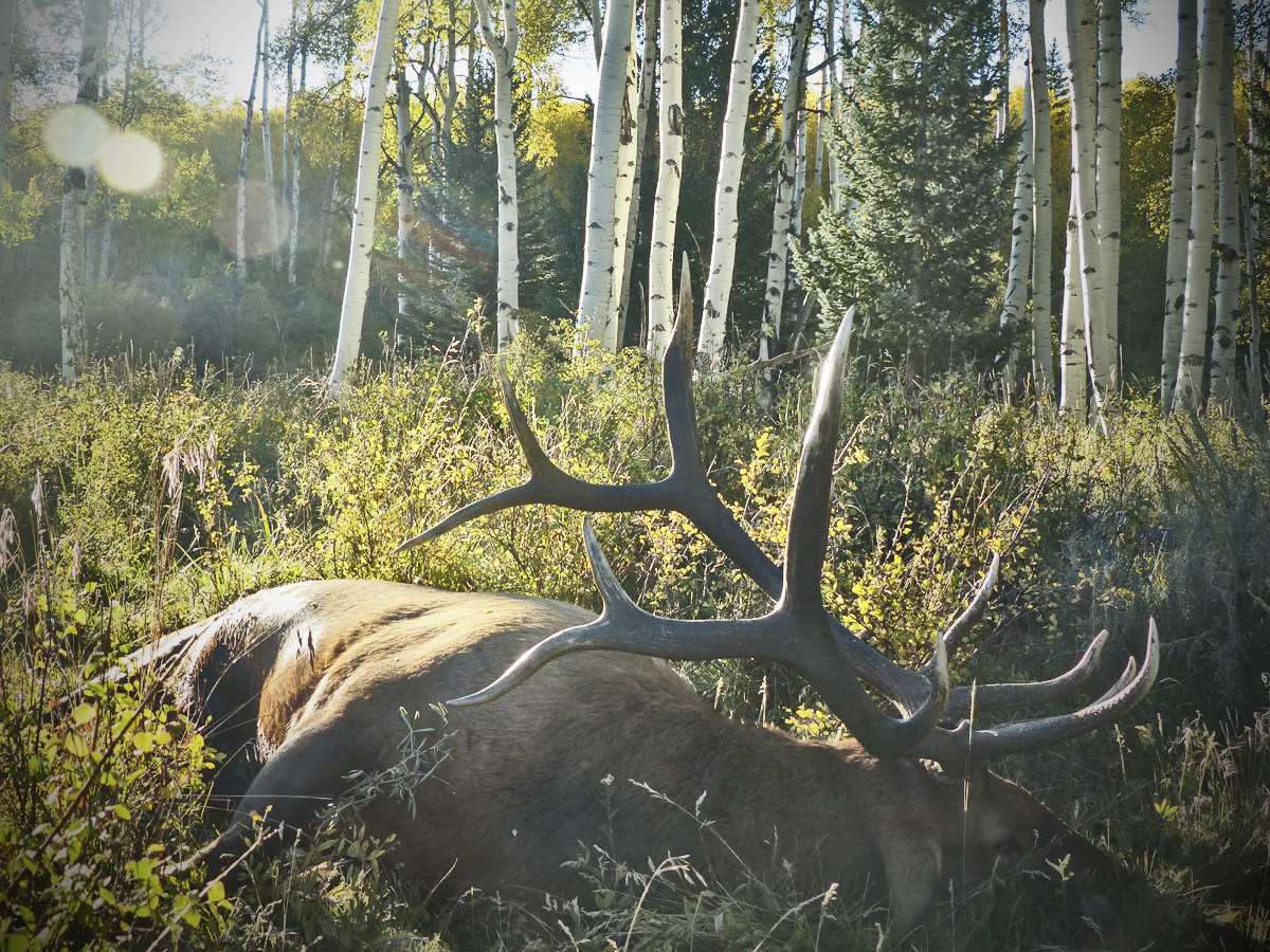The Best states for an Elk Hunt